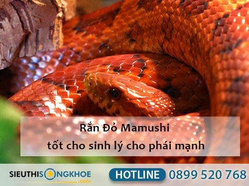 rắn đỏ mamushi thành phần viên uống hỗ trwoj sinh lý nam fuji sumo