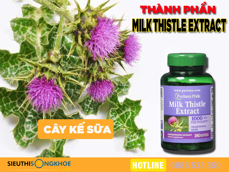 thanh phan milk thistle extract