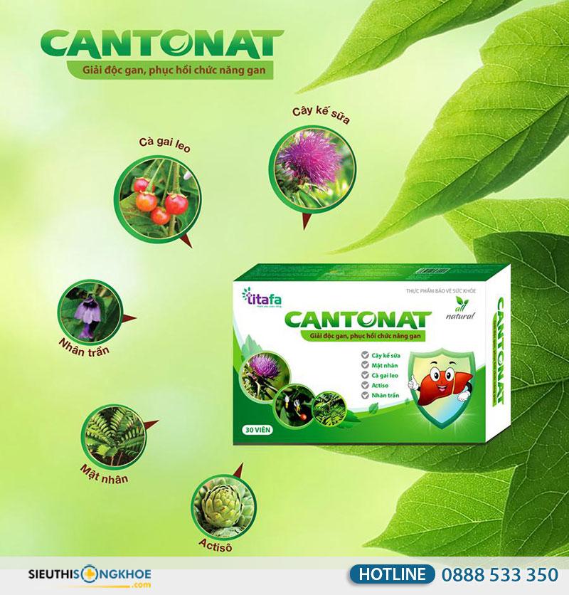 giai-doc-gan-cantonat-1