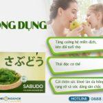 Rong Nho Sabudo (Hộp 10 gói) - Hỗ Trợ Tăng Cường Hệ Miễn Dịch & Nâng Cao Sức Khoẻ